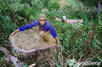 Yunnan farmers protected their ancient forests from APP's illegal logging activities.